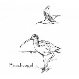 Motiv Brachvogel